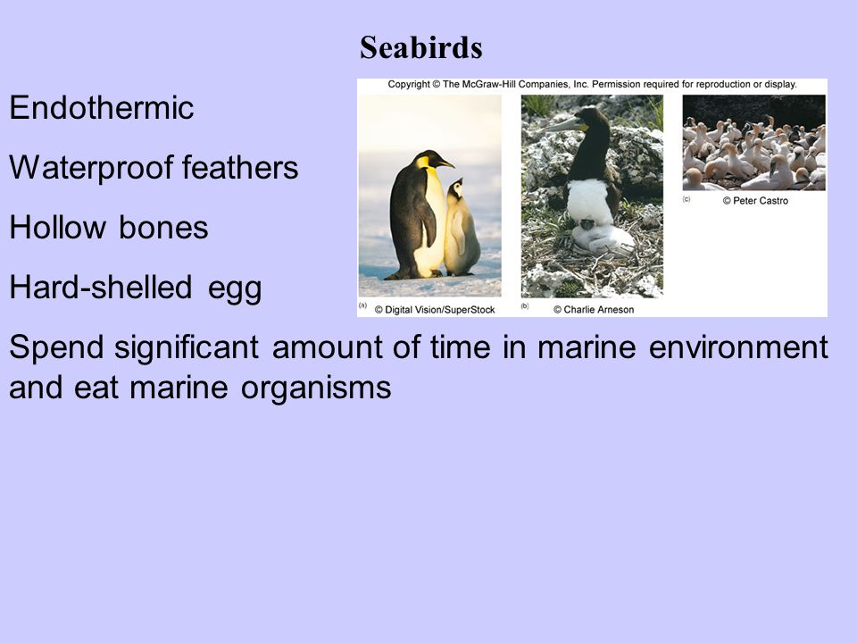 Seabirds Endothermic. Waterproof feathers. Hollow bones. Hard-shelled egg.