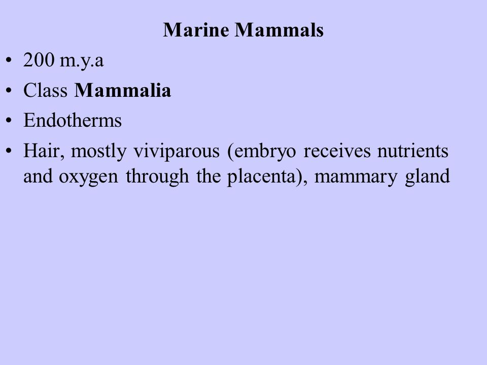 Marine Mammals 200 m.y.a. Class Mammalia. Endotherms.