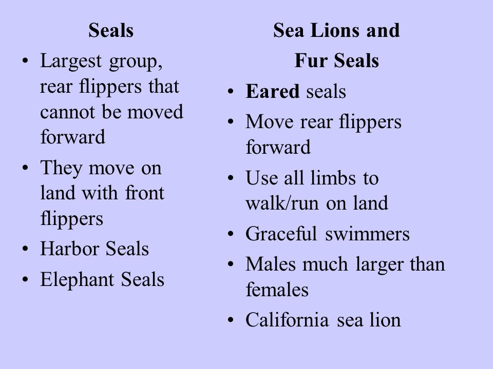 Seals Largest group, rear flippers that cannot be moved forward. They move on land with front flippers.