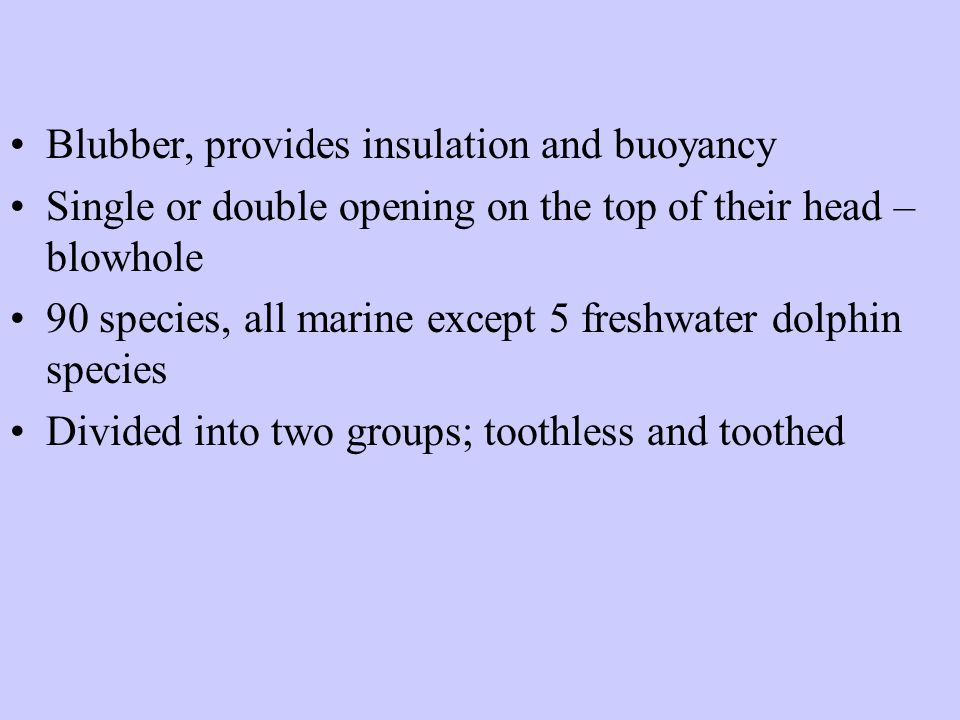 Blubber, provides insulation and buoyancy