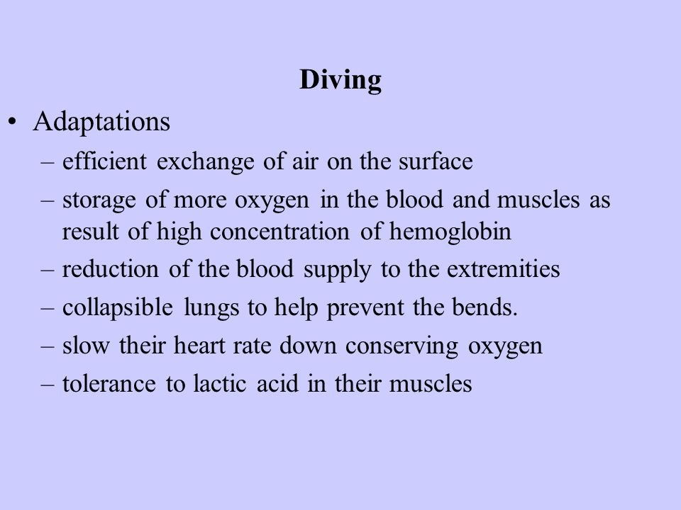 Diving Adaptations efficient exchange of air on the surface