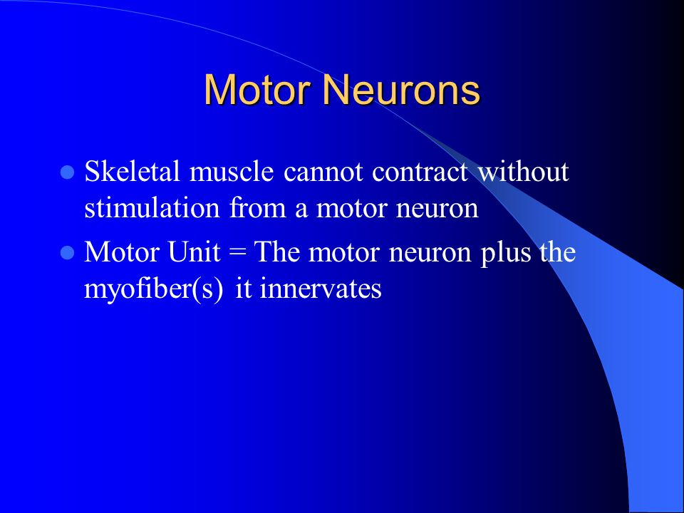 Motor Neurons Skeletal muscle cannot contract without stimulation from a motor neuron.