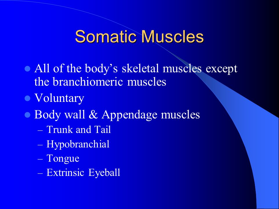 Somatic Muscles All of the body's skeletal muscles except the branchiomeric muscles. Voluntary. Body wall & Appendage muscles.