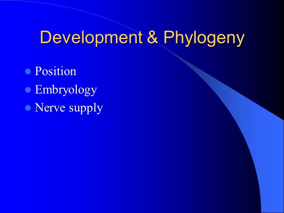 Development & Phylogeny