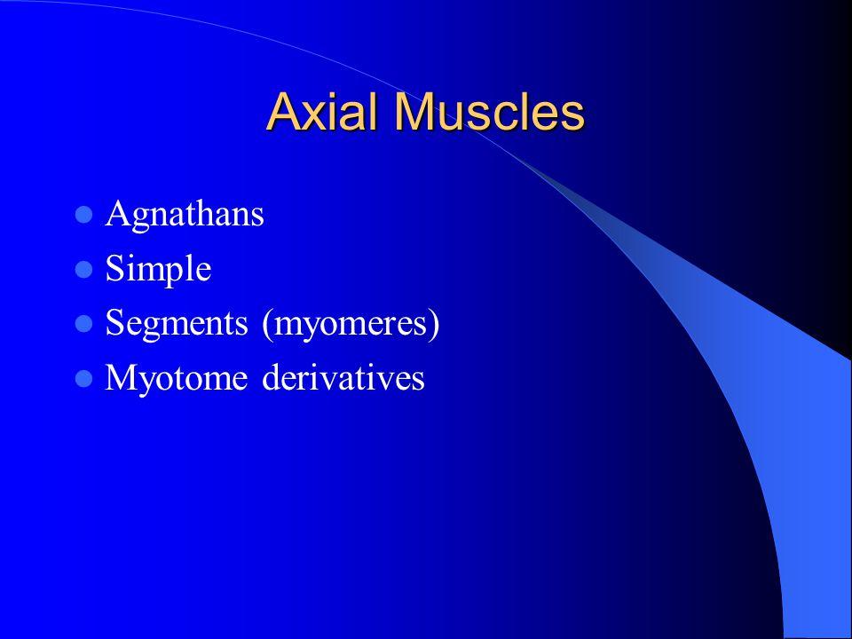 Axial Muscles Agnathans Simple Segments (myomeres) Myotome derivatives