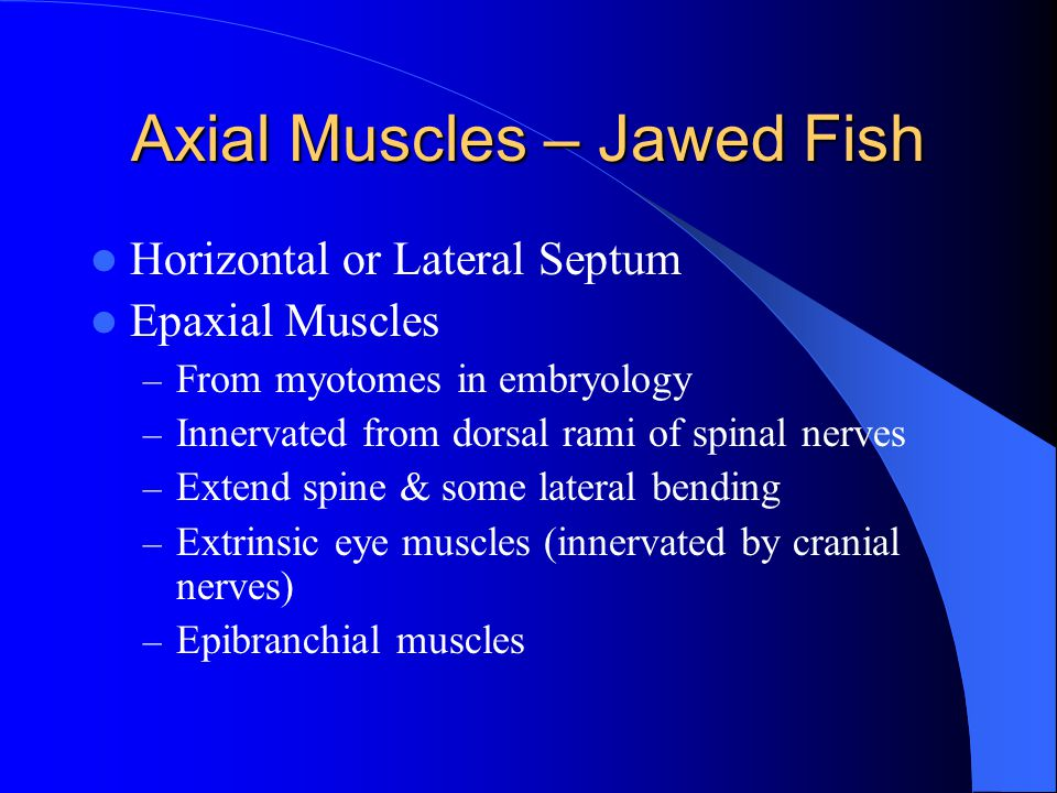 Axial Muscles – Jawed Fish
