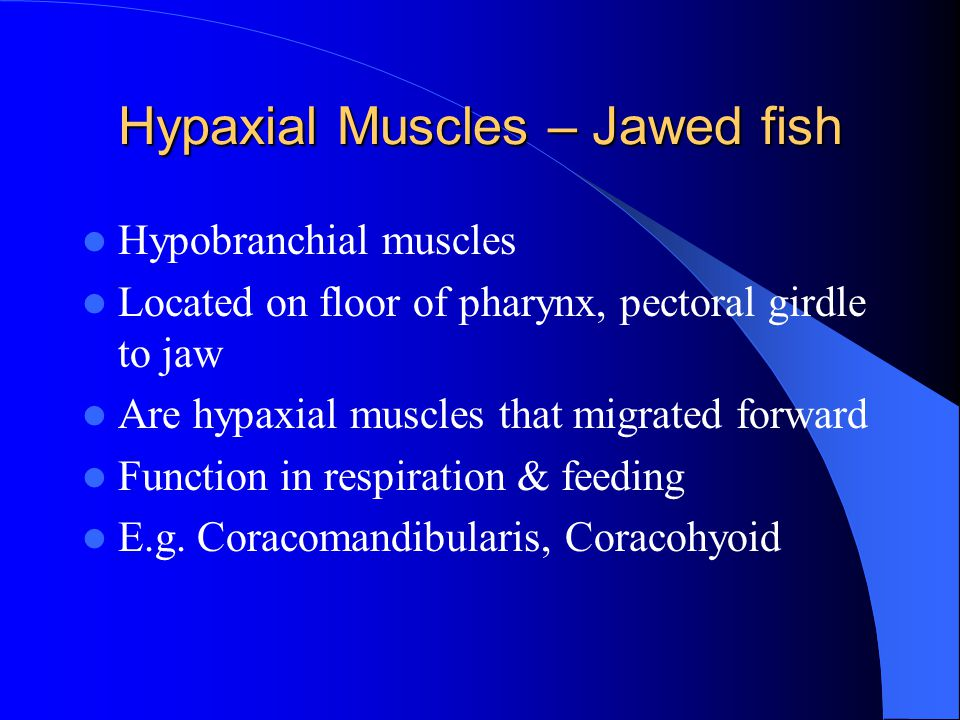 Hypaxial Muscles – Jawed fish