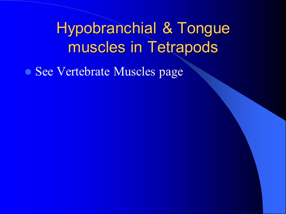 Hypobranchial & Tongue muscles in Tetrapods