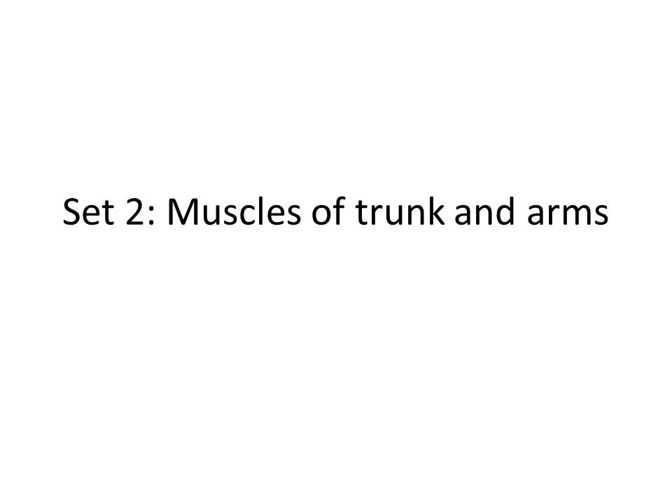 Set 2: Muscles of trunk and arms