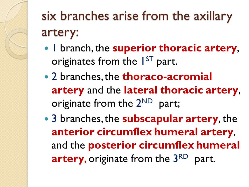 six branches arise from the axillary artery: