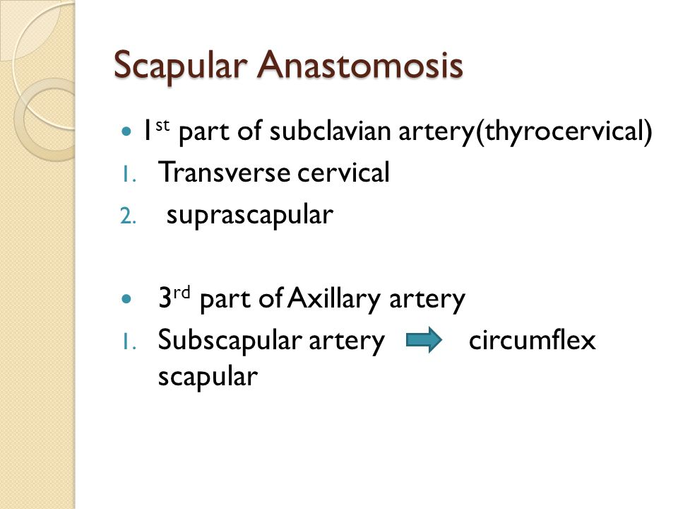 Scapular Anastomosis 1st part of subclavian artery(thyrocervical)