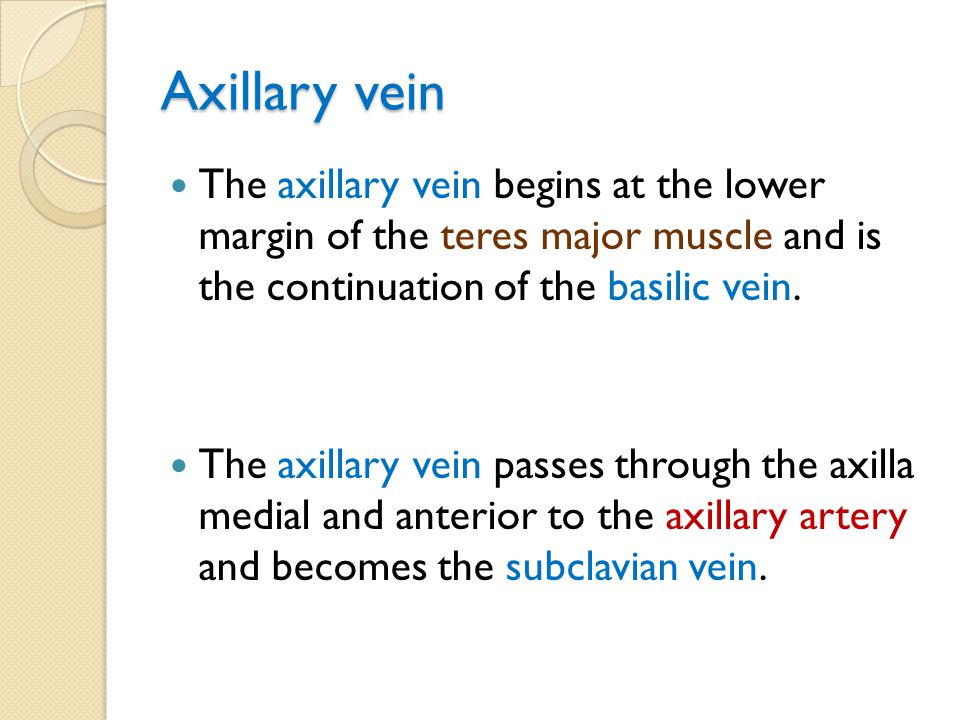 Axillary vein The axillary vein begins at the lower margin of the teres major muscle and is the continuation of the basilic vein.