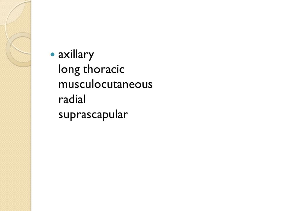 axillary long thoracic musculocutaneous radial suprascapular