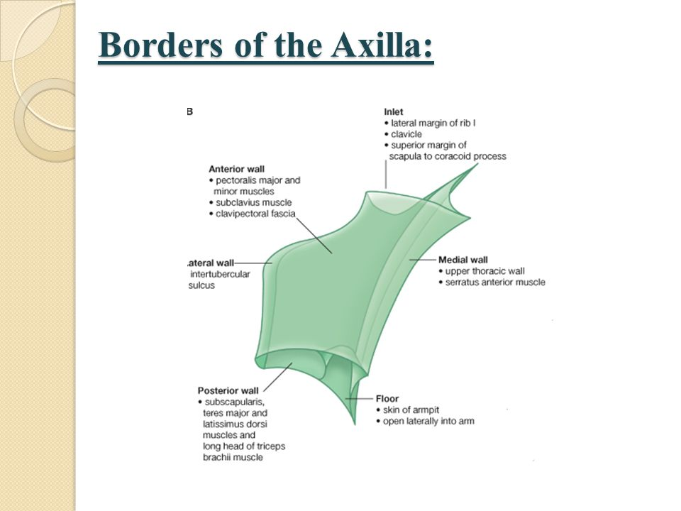 Borders of the Axilla: