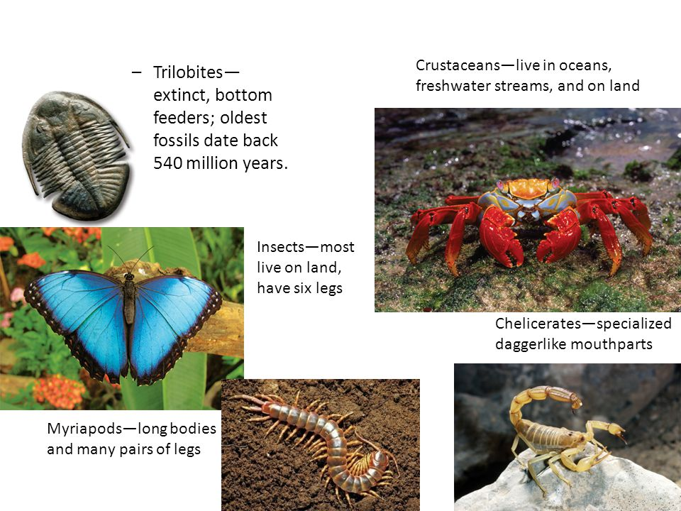 Crustaceans—live in oceans, freshwater streams, and on land
