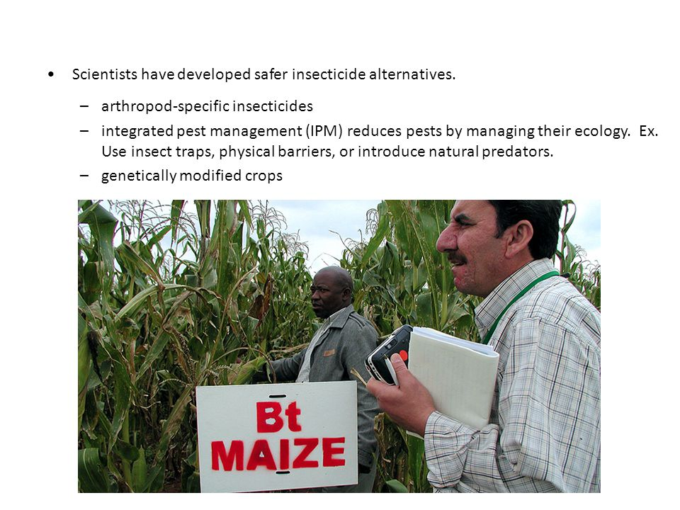 Scientists have developed safer insecticide alternatives.