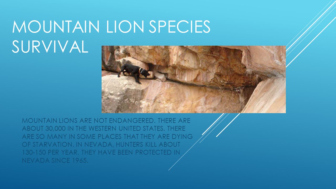 MOUNTAIN LION SPECIES SURVIVAL