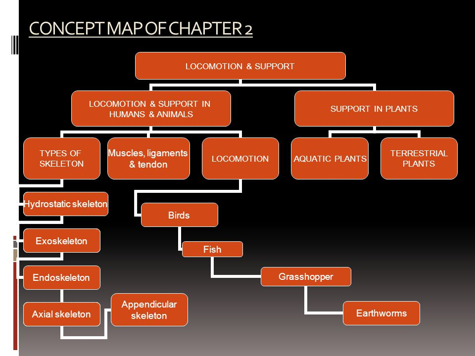CONCEPT MAP OF CHAPTER 2