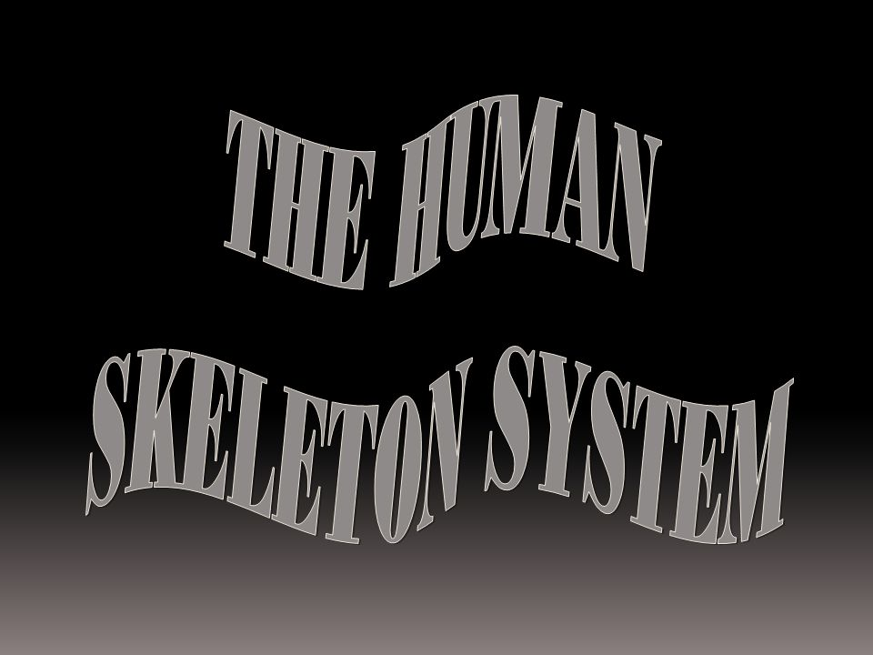 THE HUMAN SKELETON SYSTEM