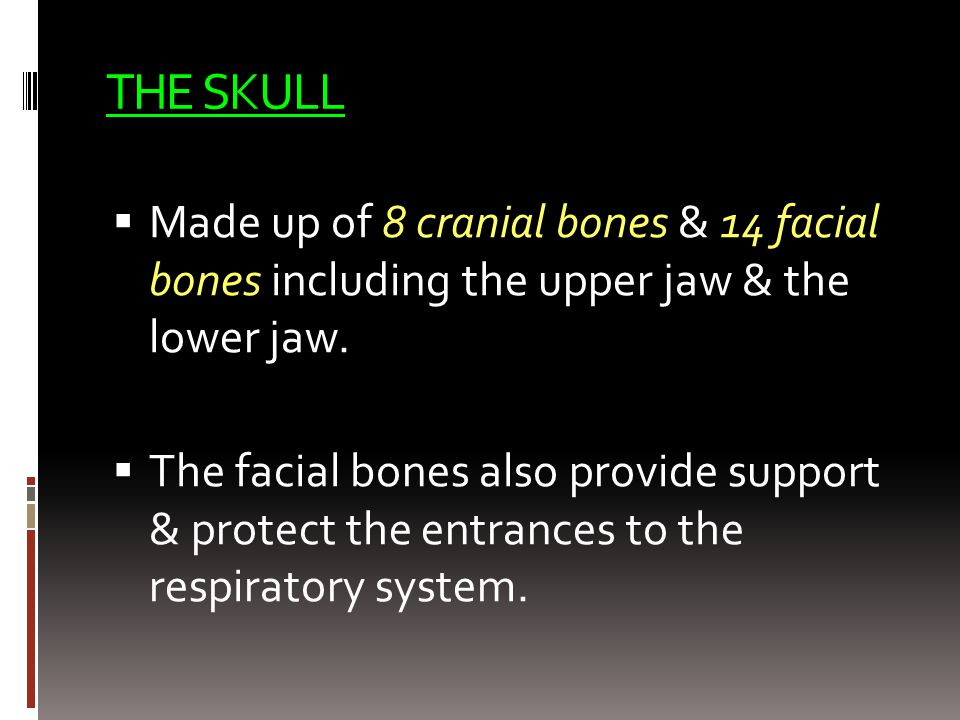 THE SKULL Made up of 8 cranial bones & 14 facial bones including the upper jaw & the lower jaw.