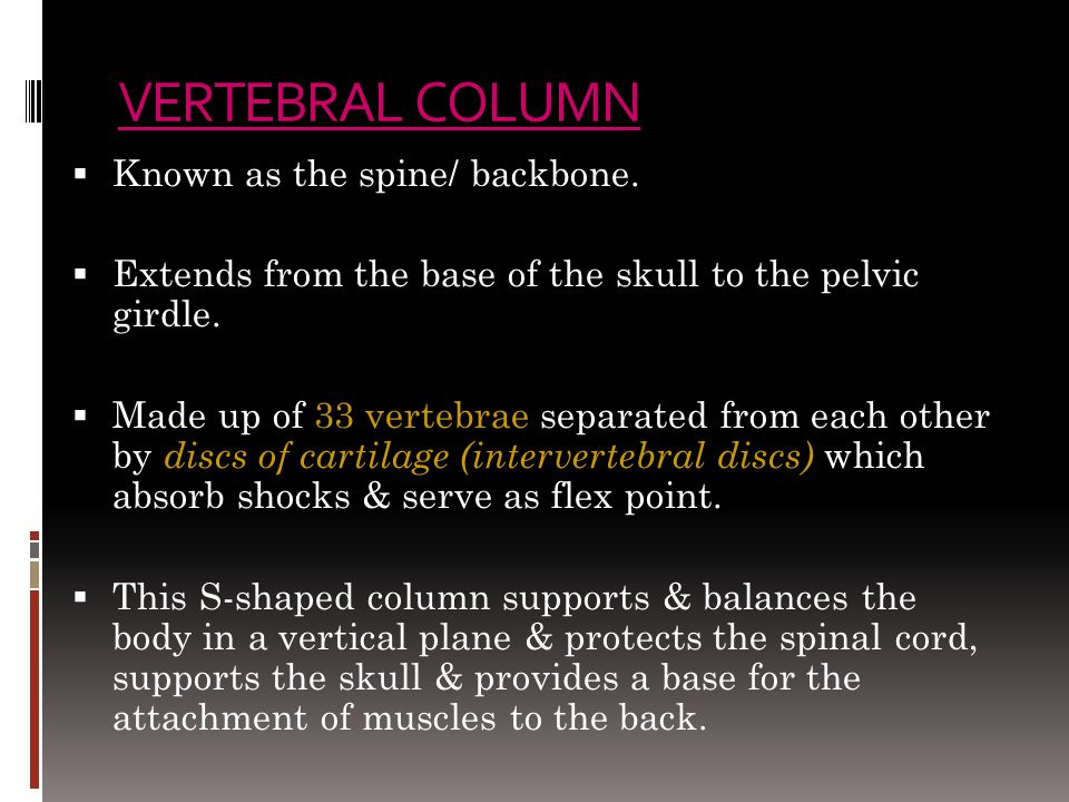 VERTEBRAL COLUMN Known as the spine/ backbone.