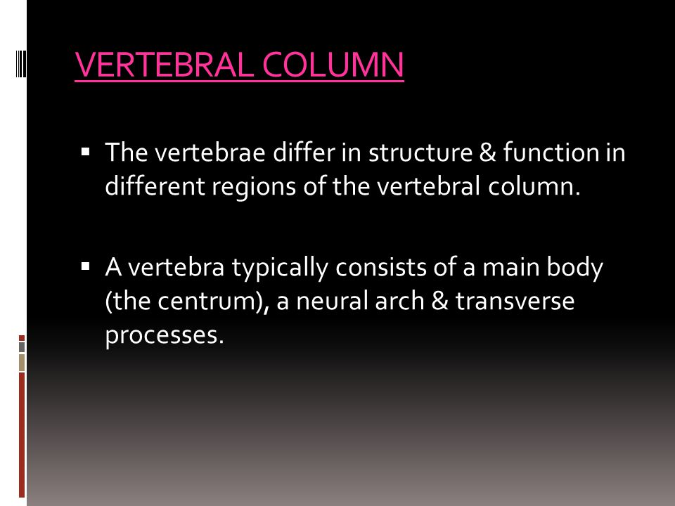 VERTEBRAL COLUMN The vertebrae differ in structure & function in different regions of the vertebral column.