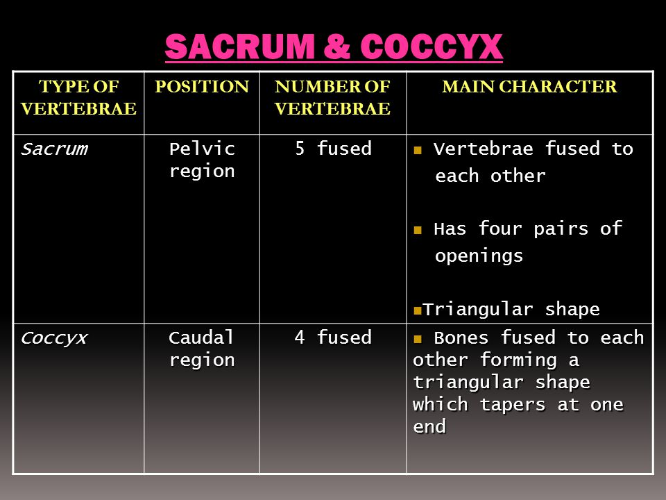 SACRUM & COCCYX TYPE OF VERTEBRAE POSITION NUMBER OF VERTEBRAE