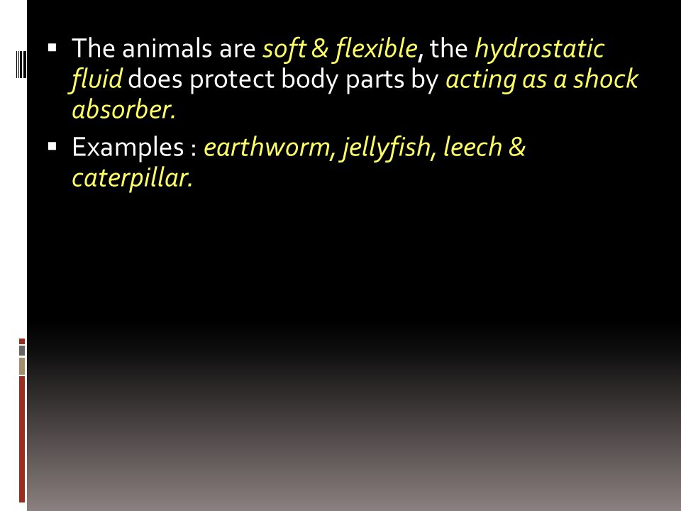 The animals are soft & flexible, the hydrostatic fluid does protect body parts by acting as a shock absorber.