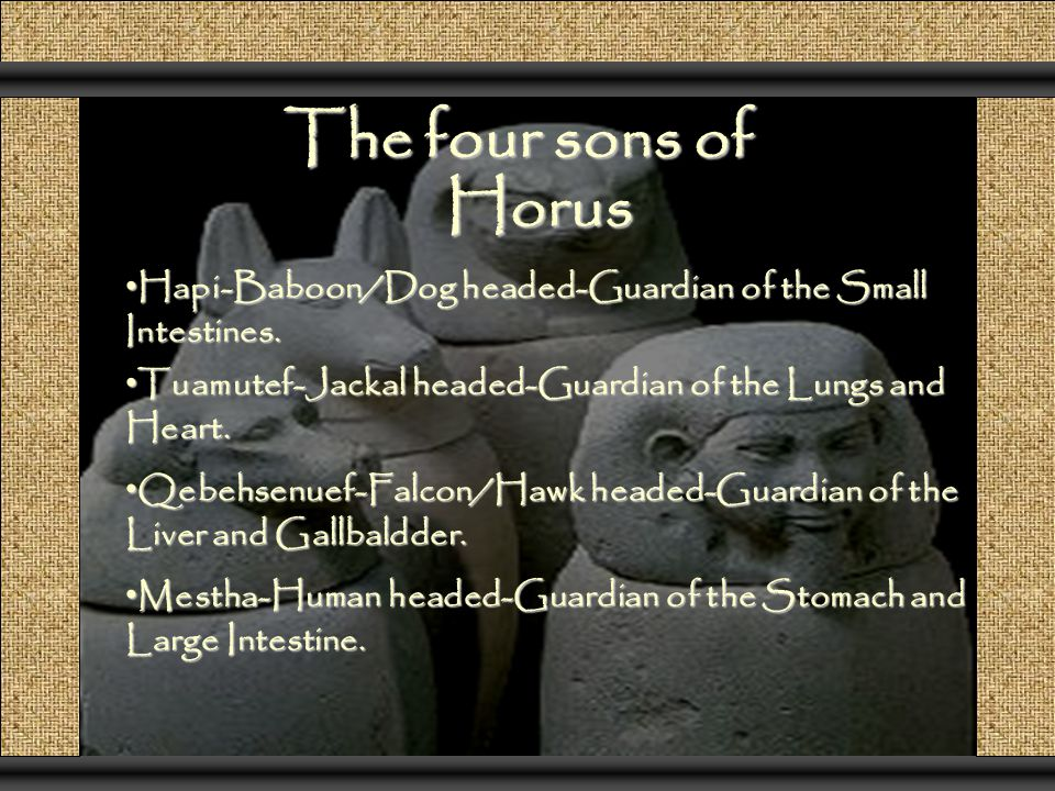 The four sons of Horus Hapi-Baboon/Dog headed-Guardian of the Small Intestines. Tuamutef-Jackal headed-Guardian of the Lungs and Heart.