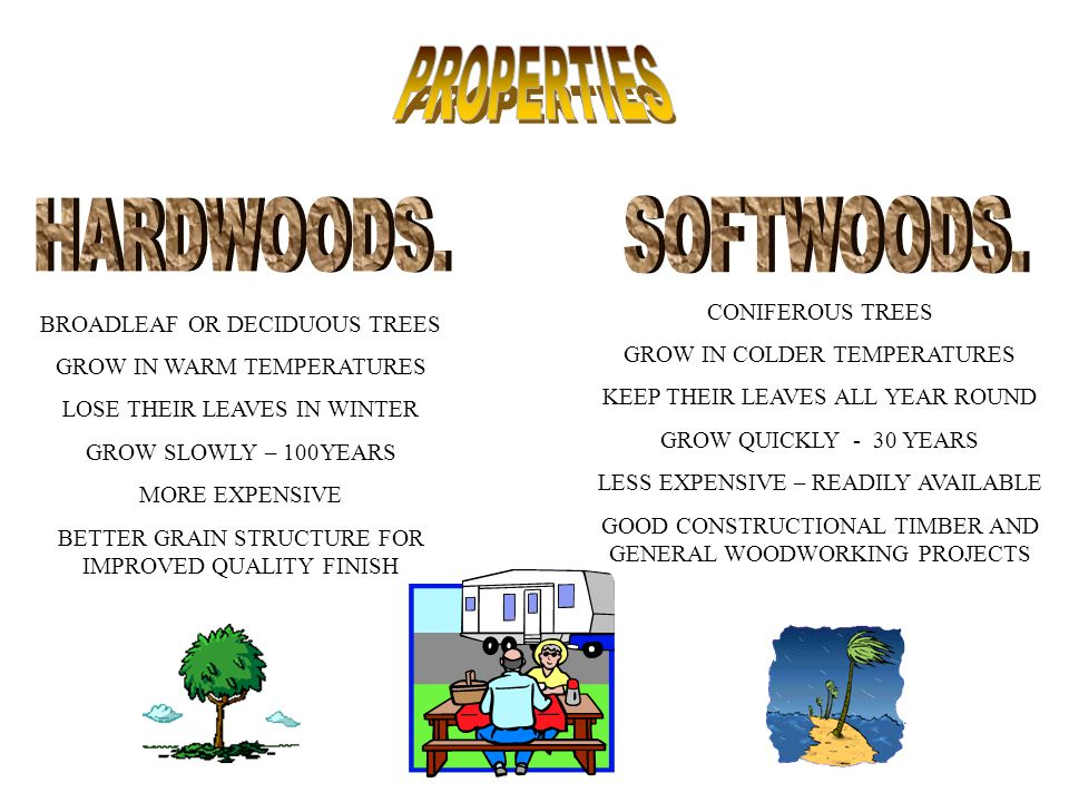 PROPERTIES HARDWOODS. SOFTWOODS. CONIFEROUS TREES
