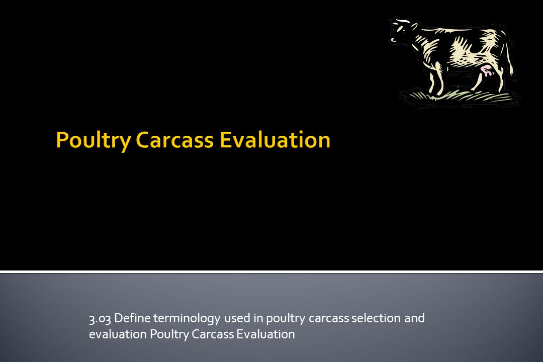 Poultry Carcass Evaluation