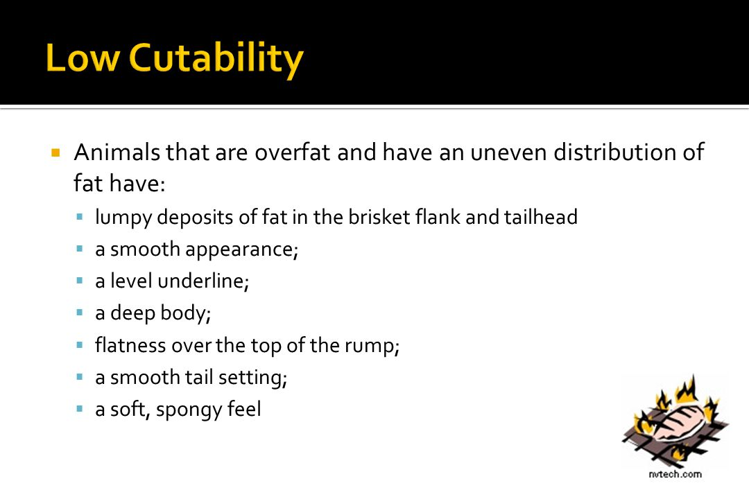 Low Cutability Animals that are overfat and have an uneven distribution of fat have: lumpy deposits of fat in the brisket flank and tailhead.