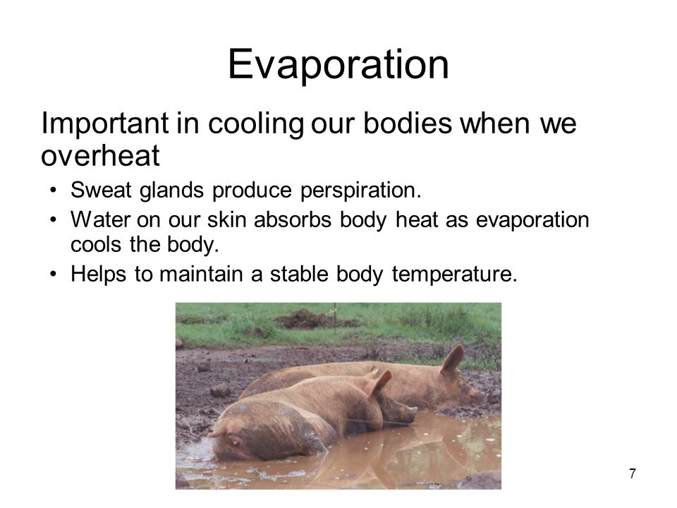 Evaporation Important in cooling our bodies when we overheat