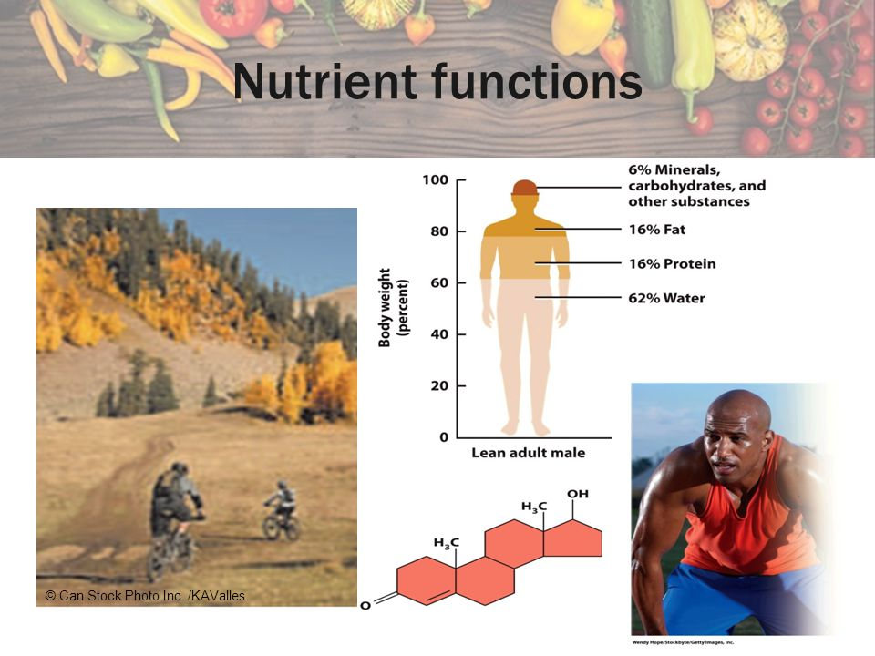 Nutrient functions © Can Stock Photo Inc. /KAValles