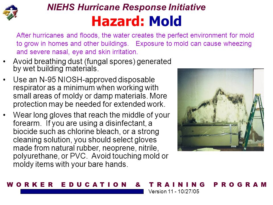 Hazard: Mold