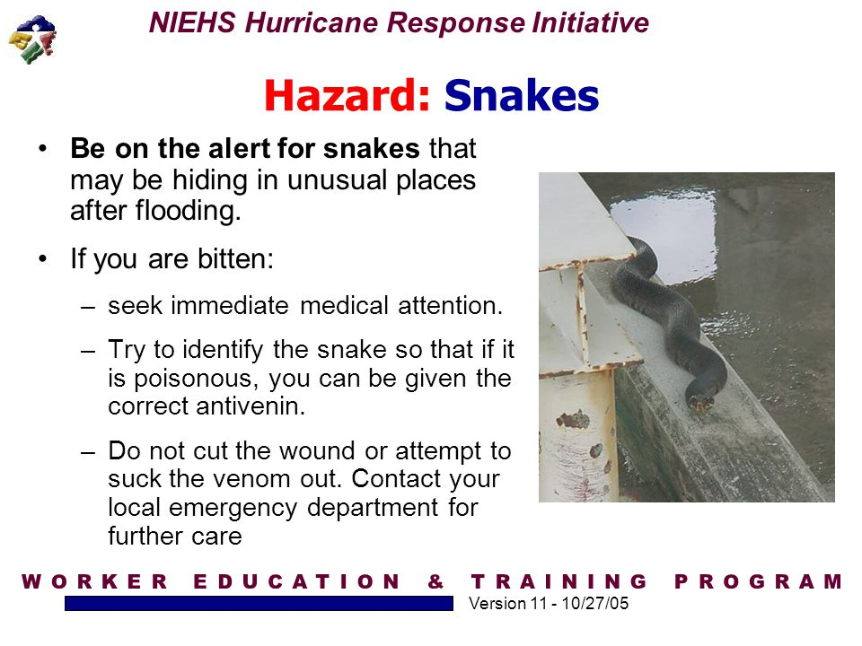 Hazard: Snakes Be on the alert for snakes that may be hiding in unusual places after flooding. If you are bitten: