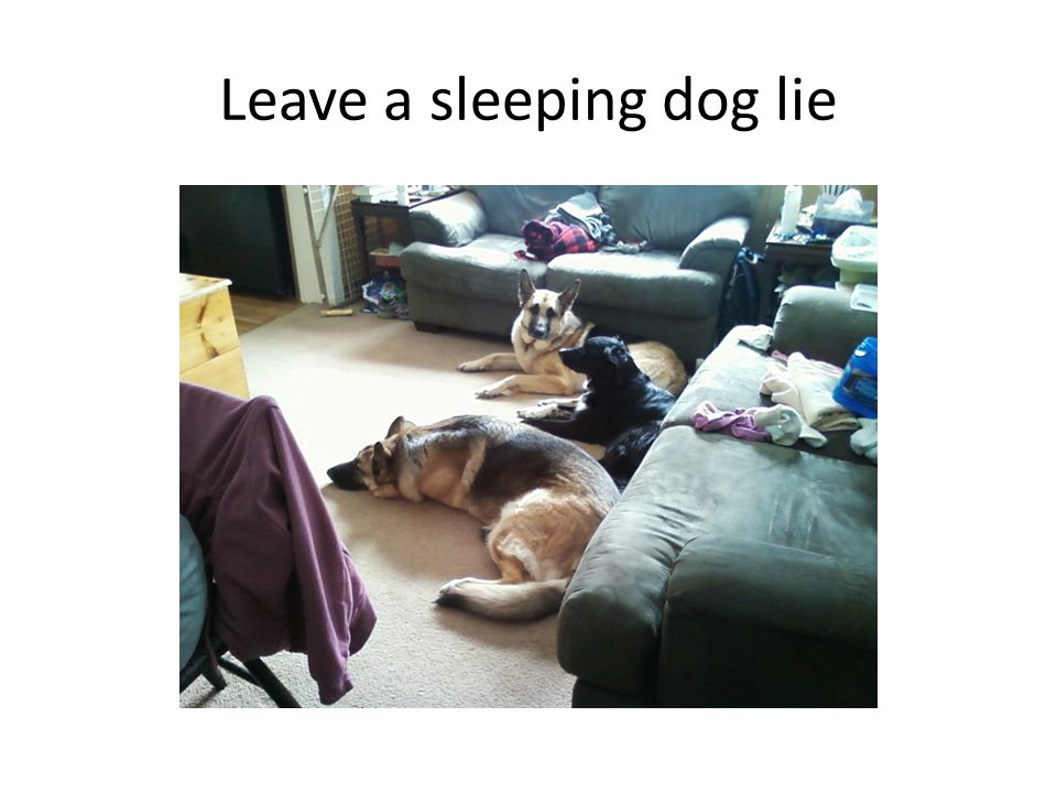 Leave a sleeping dog lie