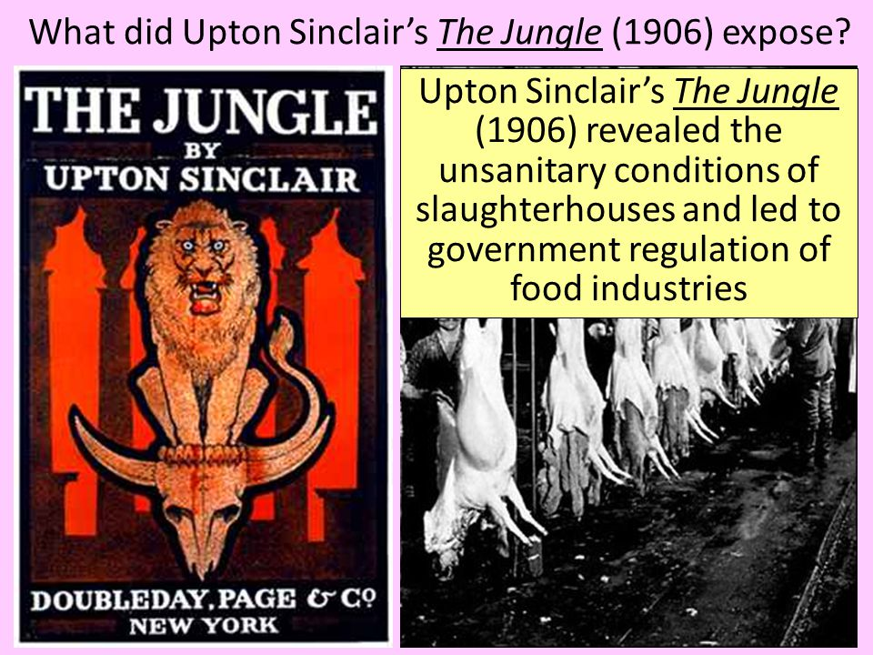 What did Upton Sinclair's The Jungle (1906) expose