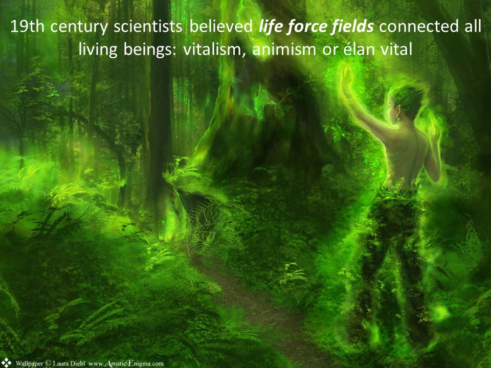19th century scientists believed life force fields connected all living beings: vitalism, animism or élan vital