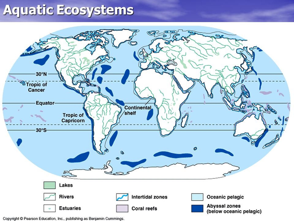 Ecosystems And Communities Ppt Download