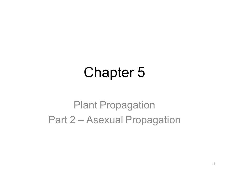 Plant Propagation Part 2 Asexual Propagation Ppt Video Online
