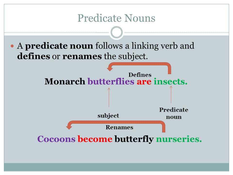 Monarch butterflies are insects.
