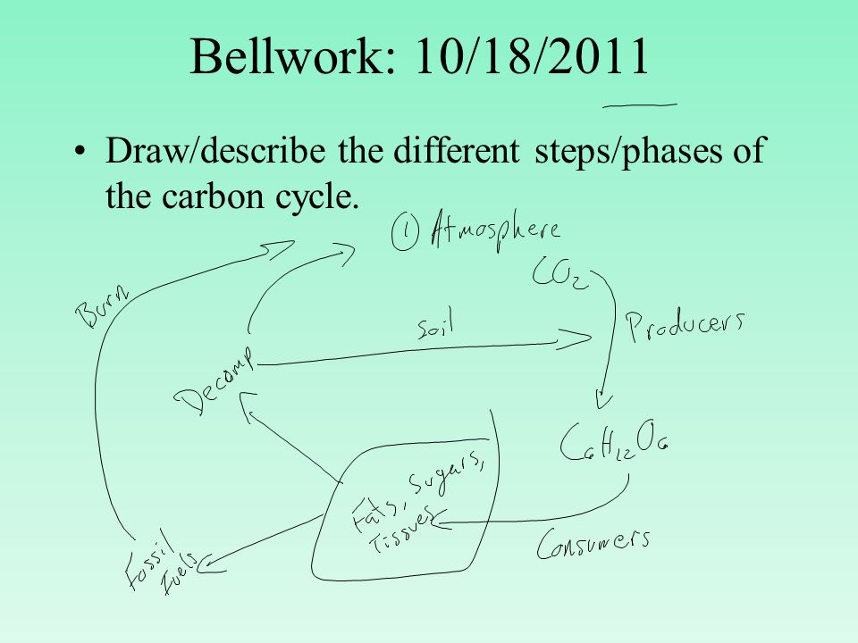 3 phases of the carbon cycle Advertisements: let us make an in-depth study of the three stages of calvin cycle the three stages are: (a) carboxylation (b) reduction and (c) formation of hexose sugar and regeneration of rubp.