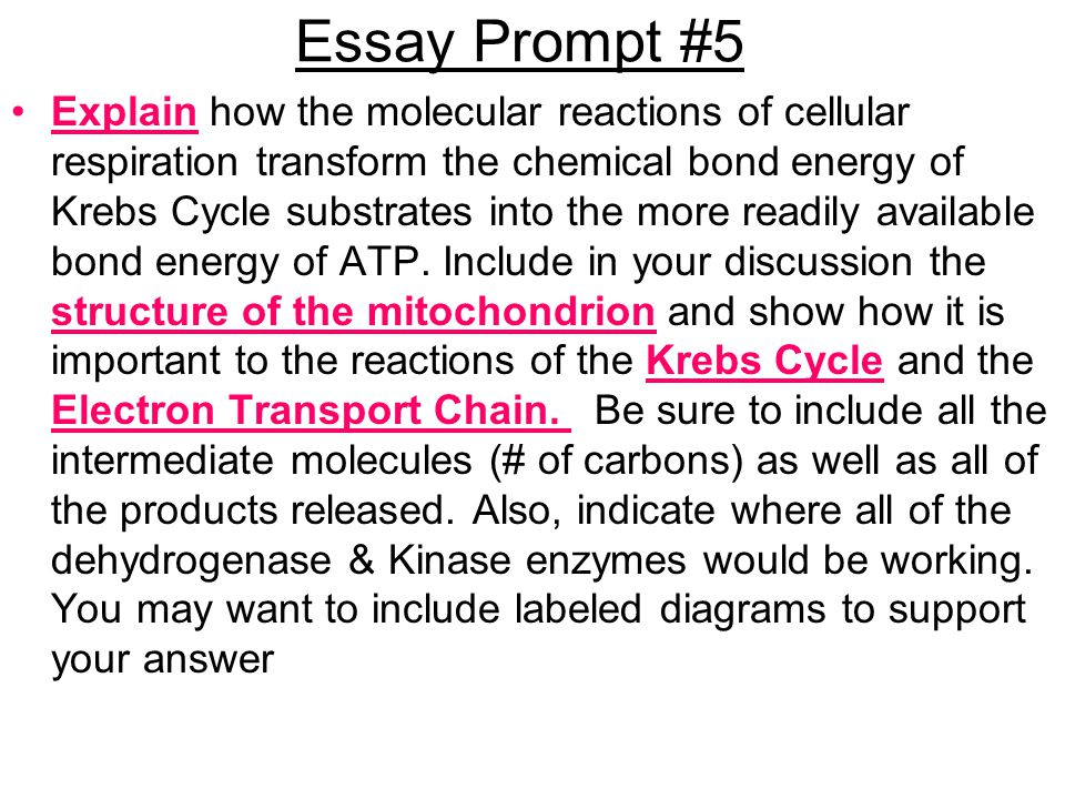 discussion essay format