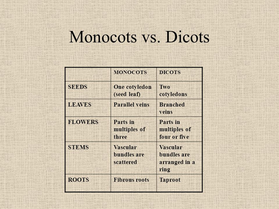 Monocots vs. Dicots SEEDS One cotyledon (seed leaf) Two cotyledons