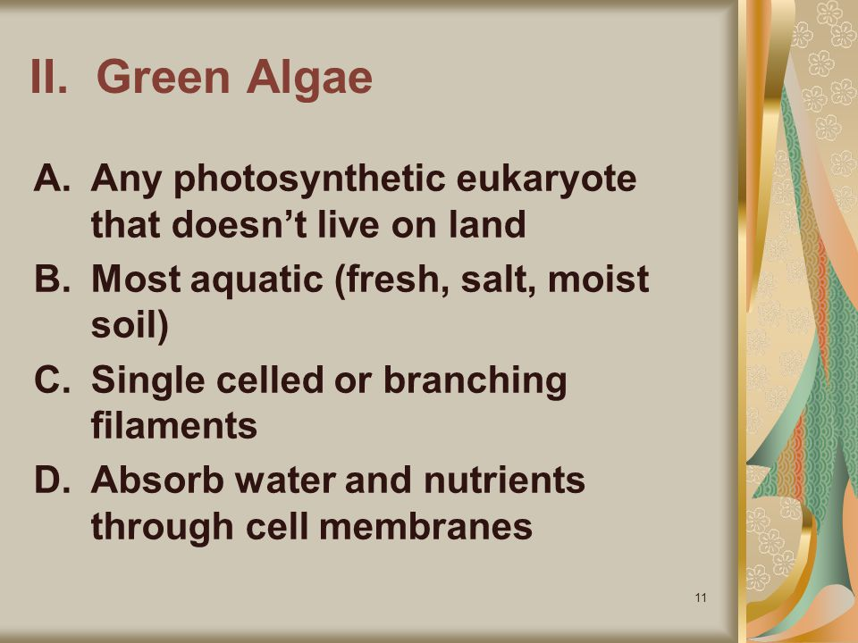 II. Green Algae Any photosynthetic eukaryote that doesn't live on land