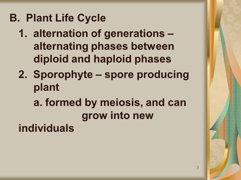 B. Plant Life Cycle 1. alternation of generations – alternating phases between diploid and haploid phases.