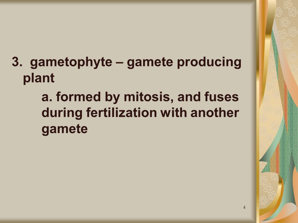 3. gametophyte – gamete producing plant