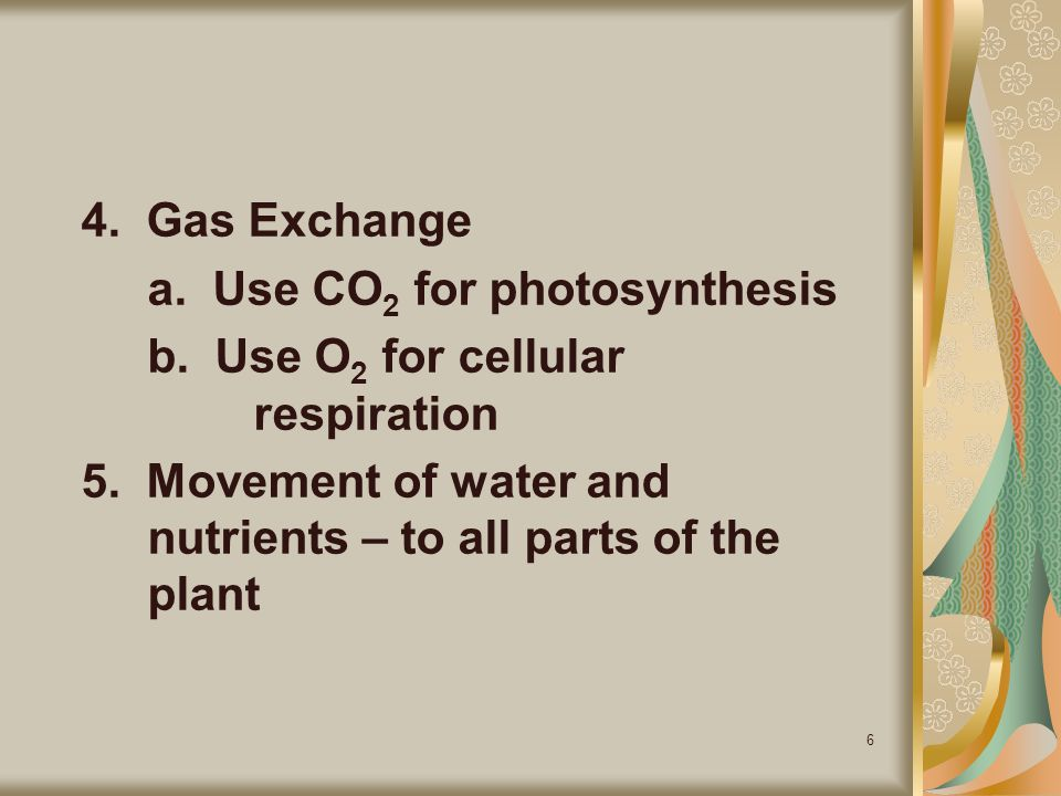 4. Gas Exchange a. Use CO2 for photosynthesis. b. Use O2 for cellular respiration.