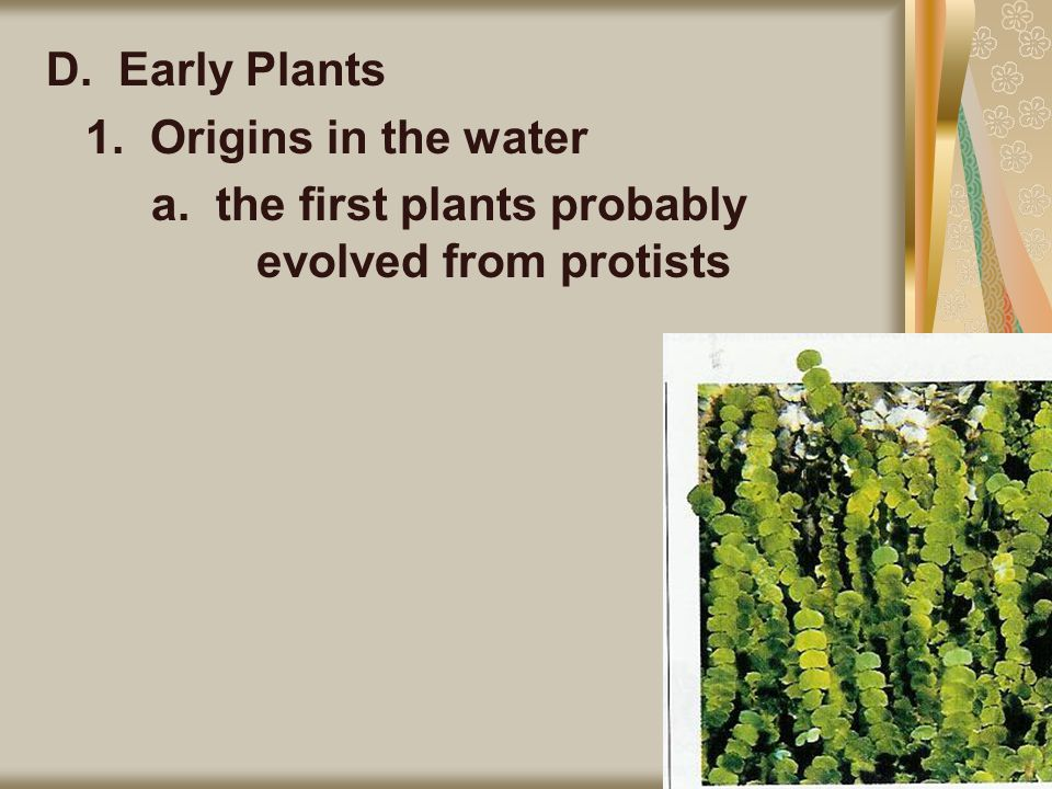 D. Early Plants 1. Origins in the water a. the first plants probably evolved from protists
